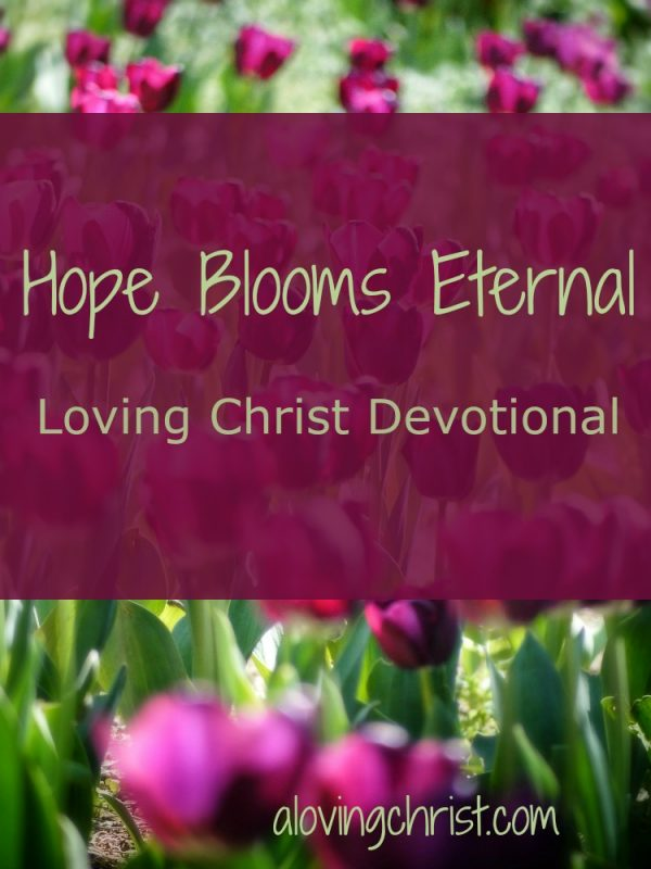 Hope Blooms Eternal -In the same way that God's creation restarts fresh, God's grace allows us to be reborn! That's the message of hope found in 2 Cor 5:17: